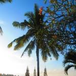 Taman Indrakila Resort 48